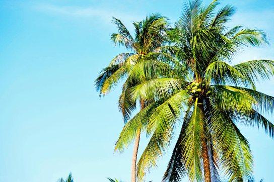 Palmera cocos cielo Ao Nang Krabi