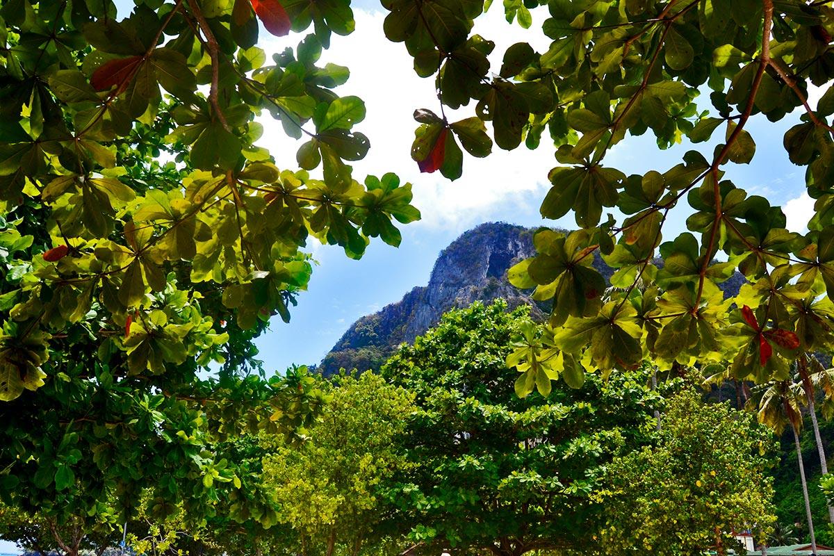 Montaña árboles plantas islas Phi Phi Tailandia