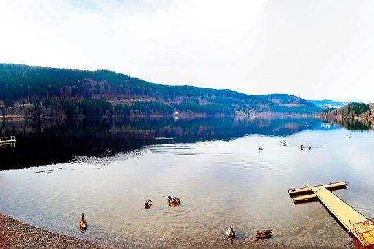 Vistas aves patos orilla pasarela montes bosques lago Titisee Selva Negra Alemania