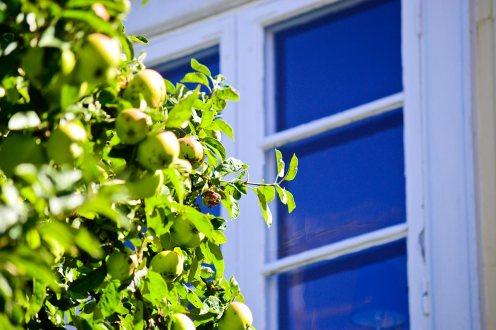 Árbol frutos verdes ventana casa típica sueca Vaxholm Suecia