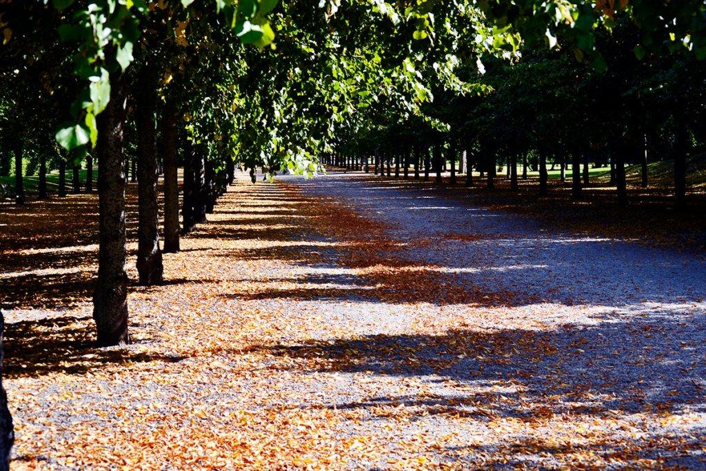Caminos piedras hojas otoño caídas arboleda jardines Palacio Real Drottningholm
