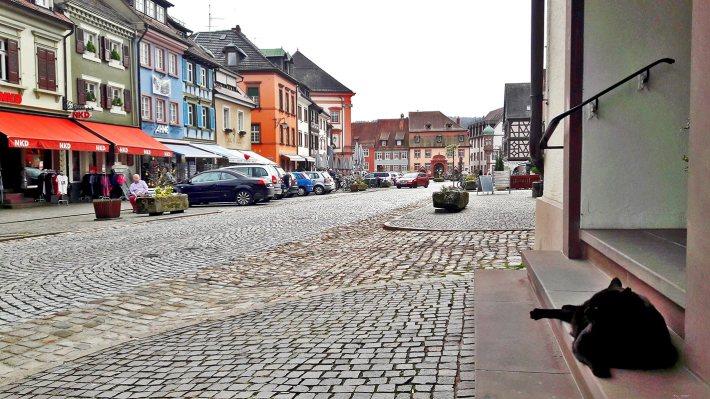 Gato negro descanso calles edificios Gengenbach