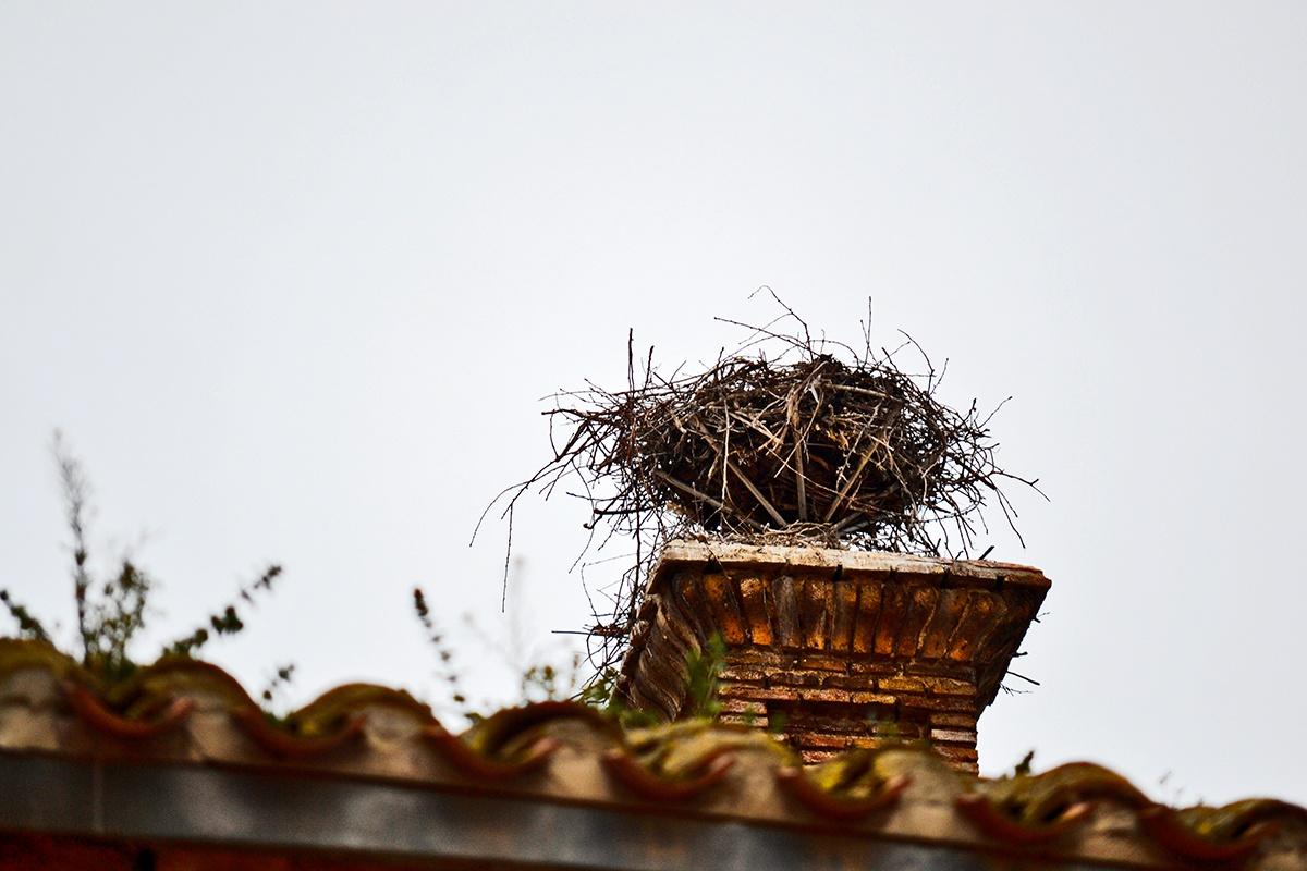 Nido cigüeña alto tejado Alfaro La Rioja
