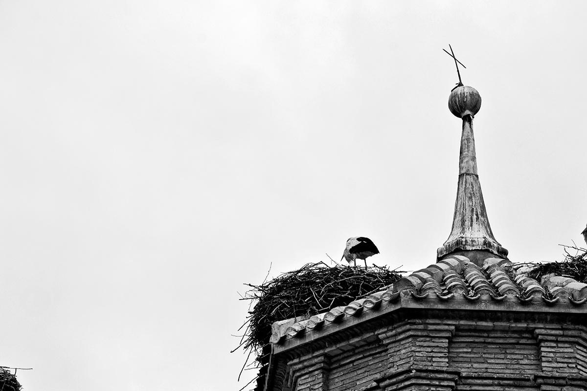 Cigüeña nido cruz torre colegiata Alfaro blanco y negro