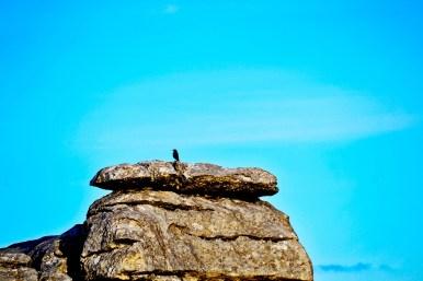 Pájaro piedras calcáreas El Torcal Antequera