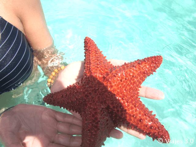 Isla Saona Estrella de Mar