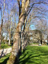 camino flanqueado por viejos árboles, y jardín interior