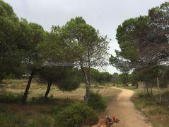 Falésia 11 Lisboa Algarve 201904