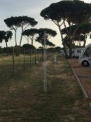 Praia de Falèsia, Algarve