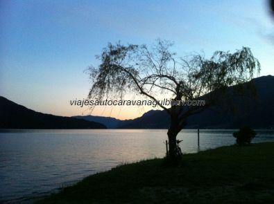 """la """"Y"""" del Lago Como, hacia Como y Bellagio, con este desnudo árbol como testigo y guardián"""