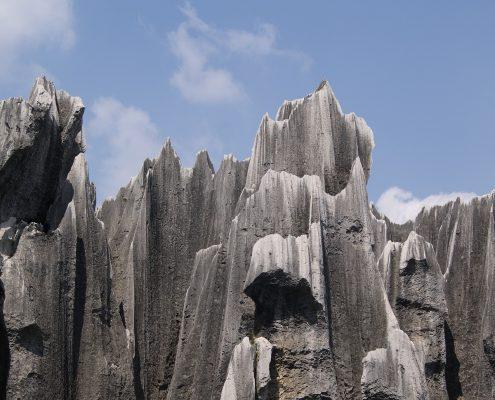 bosque piedra