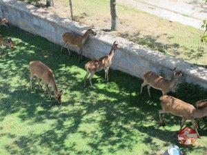 ciervos en el parque de la taconera pamplona