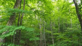 Bosque caducifolio en New Hampshire