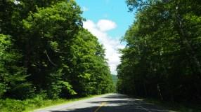 Carreteras por el bosque… nada que ver con Nuevo México