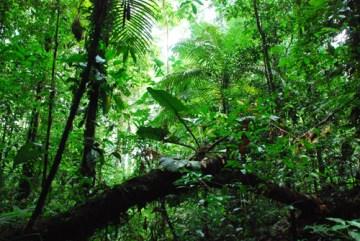 Bosque en la estación de Pararé, Nouragues