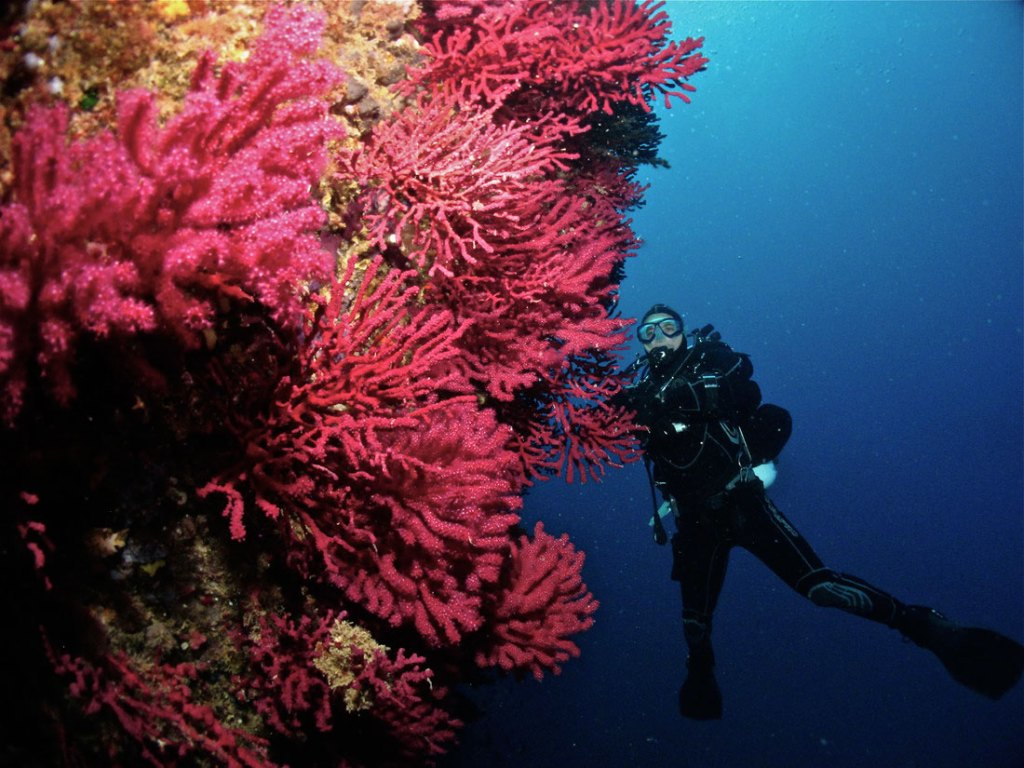 Buceo Experience