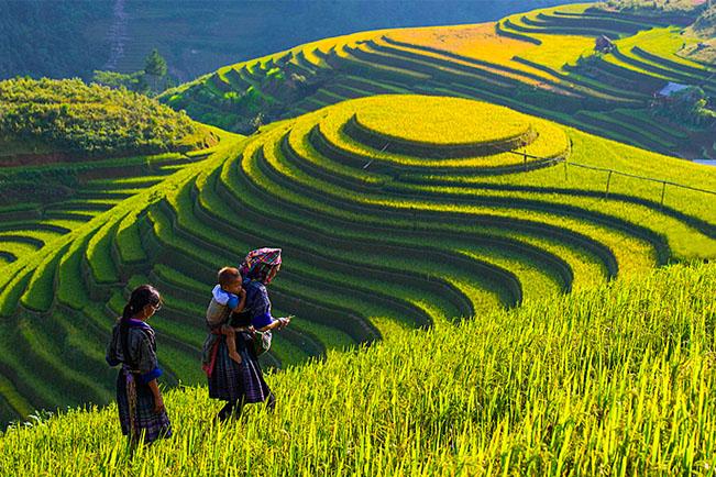 Resultado de imagen de Vietnam imágenes