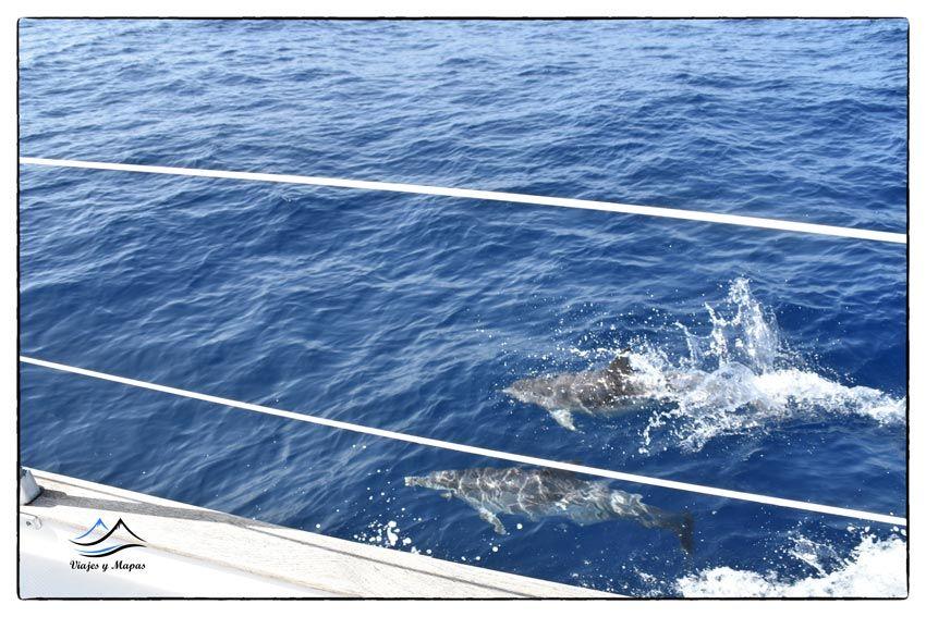 donde-ver-delfines-y-ballenas-en-tenerife