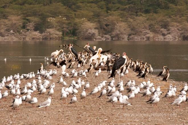 nakuru-lake-wild