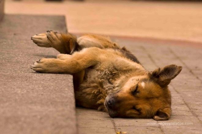punta-arenas-perro