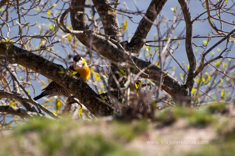 Corrientes-aves-avistaje