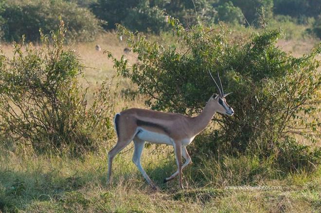 masai-mara-2