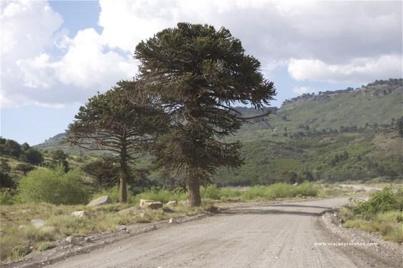 ruta-a-villa-pehuenia