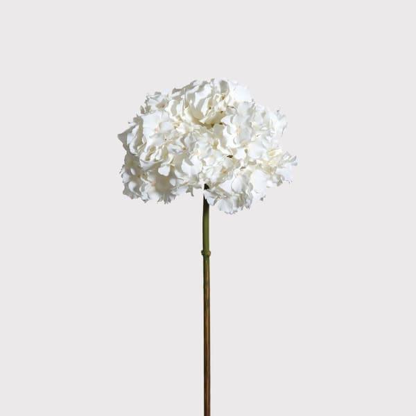 White hydrangea stem (no leaves)