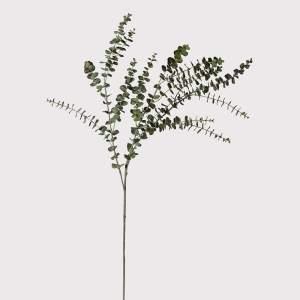 Baby eucalyptus leaf spray