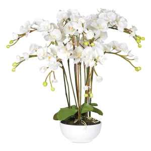 White orchid in white ceramic bowl