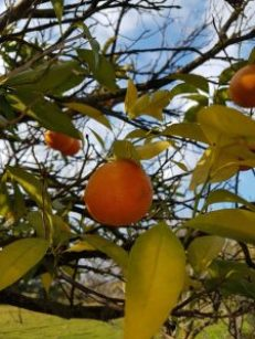 Unknown Portugal, the sun orange
