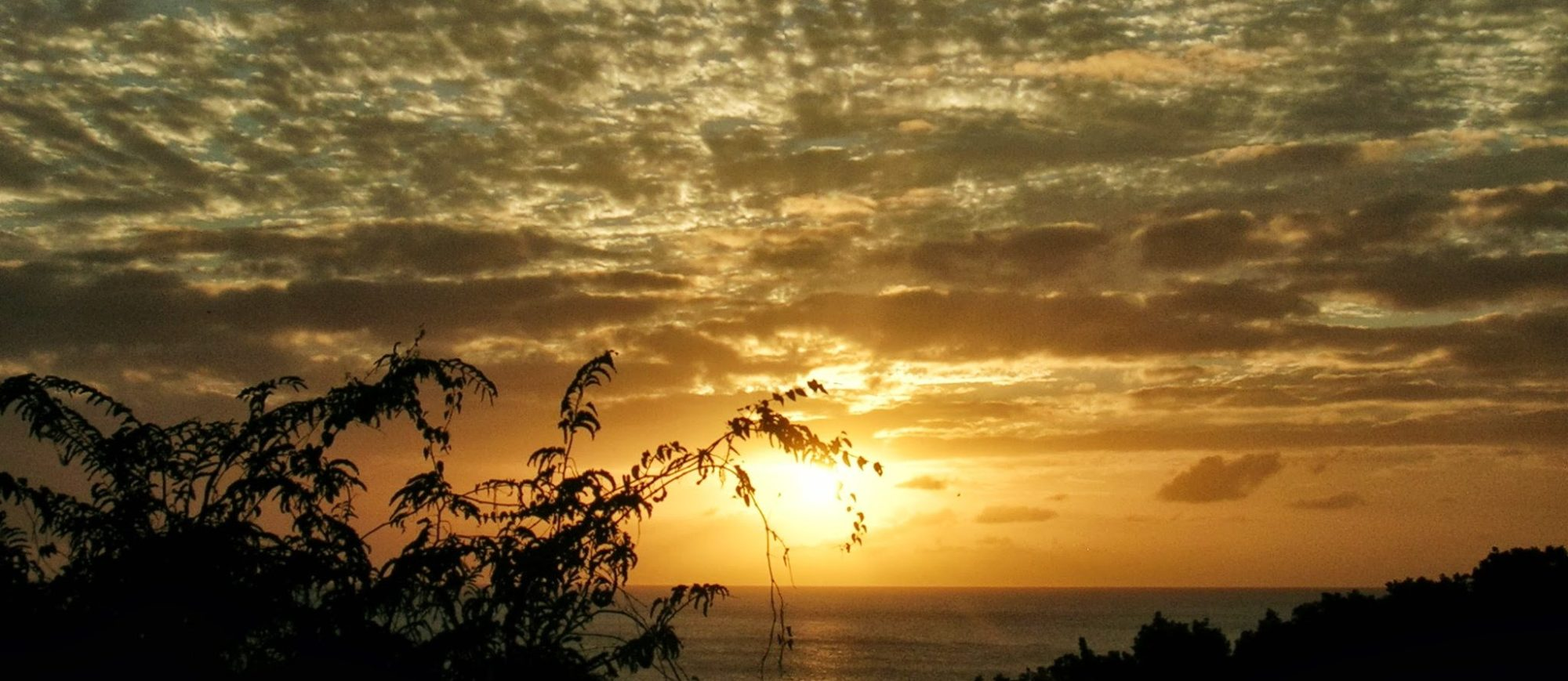 barbados sunset bats rock bay