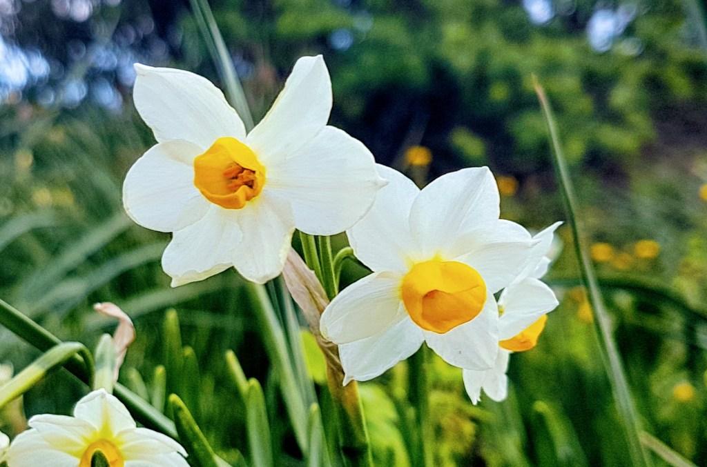 Kevään odotusta - ulkoreitti