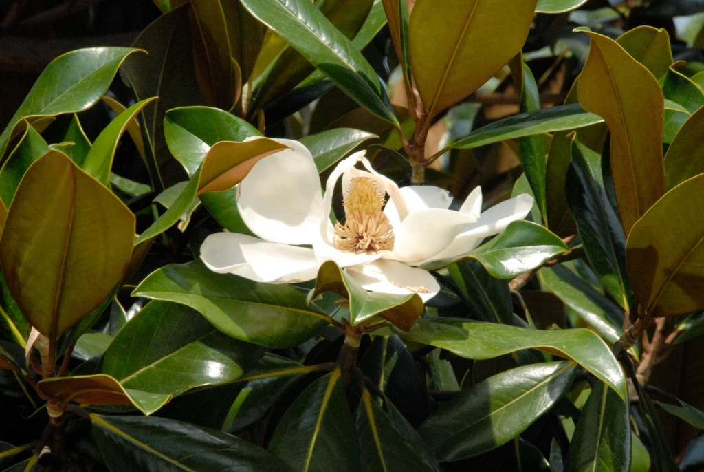 Magnolia- My Happy Place - Paikkamme maailmassa