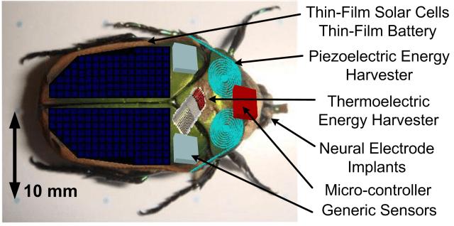 insectcyborg