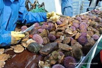 Després d'anar amb vaixell a veure puffins res millor que una mica de sushi acabat de pescar