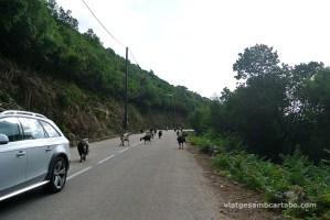 Cabres a la carretera 2
