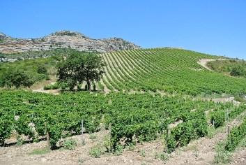 U Castellu Piattu vinyes
