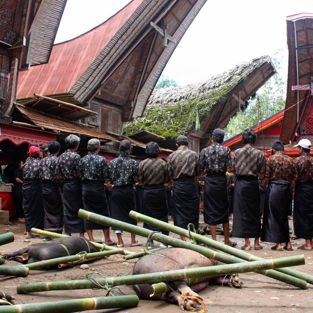 Rituals Toraja #Sulawesi #Viatjarpelmon