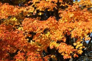 2008-10-26 (tardor a Central Park)