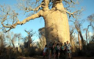 2017-07-28 (amb amics a un baobab gegant)