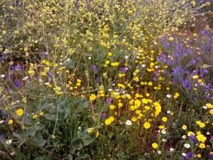 campo con flores 2 small