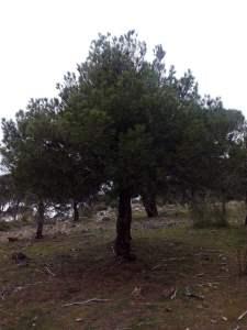 árbol en expansión s