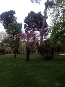 árboles s