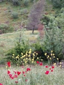 floreciendo s
