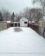 Our garden in winter, 2015 soon after we have moved here. In the middle grows huge burdock weed around the old tree trunk.