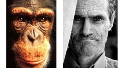 Autosemejanza: la mirada de los simios guarde similitudes con la mirada de los humanos, sus parientes biológicos más cercanos.