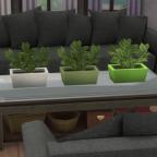 White, Sage, Lime