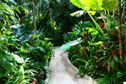 Jardim tropical do Nigi Nigi Nu Noos