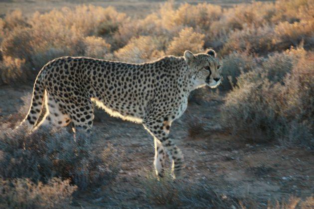 Safari próximo da Cidade do Cabo 23